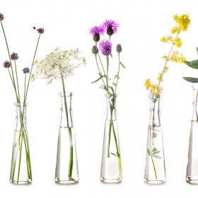 ako si vybrať esenciálne oleje bylinky vo vazach dadoma